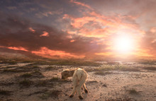 Bible Story Concept: Lost Lamb