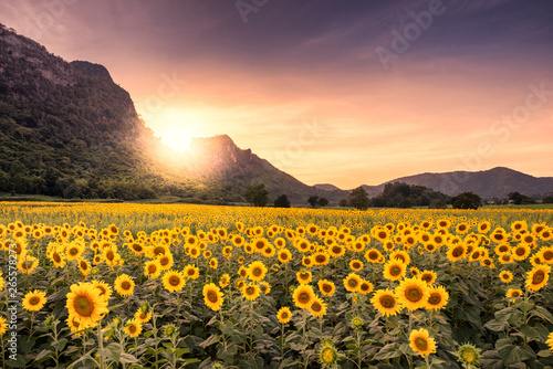 Fotobehang Meloen Beautiful sunset landscape view of field of blooming sunflowers on a background sunset