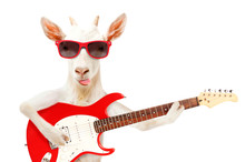 Funny Goat Showing Tongue In S...