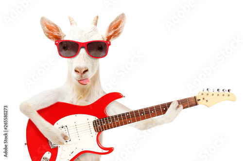 Fotografía Funny goat showing tongue in sunglasses with electric guitar isolated on white b