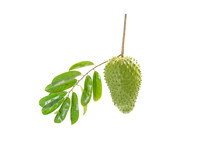 Annona Muricata Fruit Green Fresh White Background