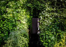 Green Ivy Archway Background