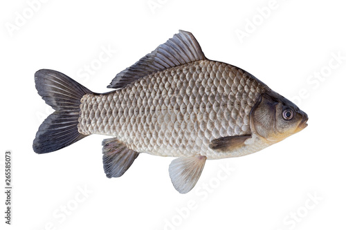 Fotografie, Obraz  The Prussian carp, silver Prussian carp or Gibel carp  isolated on a white backg