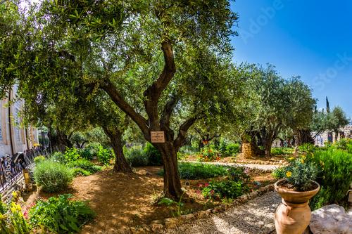 Fotografía Magnificent well-kept garden
