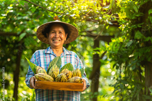 Asian Woman farmer holds the cocoa fruit in the crate with a happy smile Fototapet