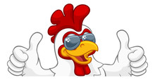A Chicken Rooster Cockerel Bird Cartoon Character In Cool Shades Or Sunglasses Peeking Over A Sign And Giving A Double Thumbs Up