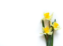 Yellow Narcissus Flowers On A Light White Background. Congratulation Flora Background For Greeting Card.