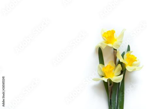 Obraz na plátně Yellow Narcissus Flowers on a light white background