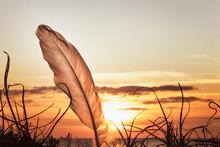 Bird Feather On Sea Sunset Background