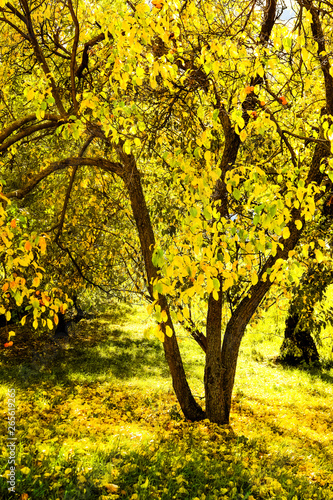 Wall Murals Melon Autumn nature scene background, leaves and trees outdoors