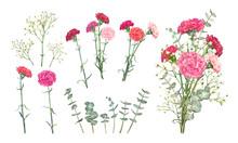 Set Carnation Flowers