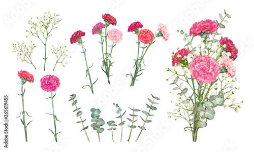 Photo Set Carnation flowers