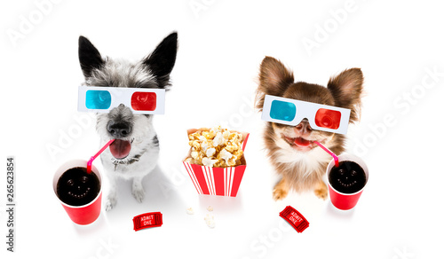Papiers peints Chien de Crazy couple of dogs to the movies