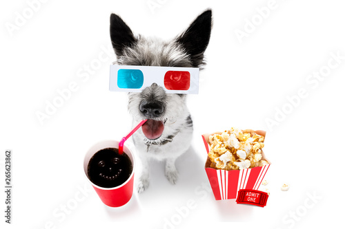 Papiers peints Chien de Crazy dog to the movies