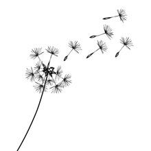 Löwenzahn · Pusteblume · Dandelion