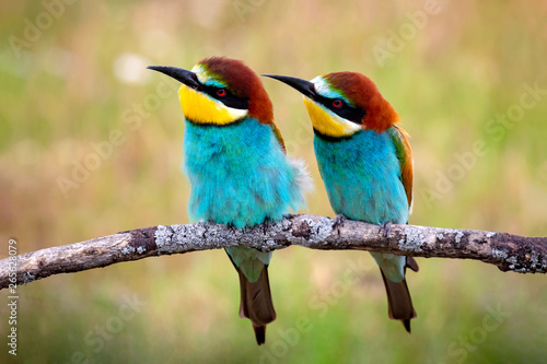 Foto Love on the branch