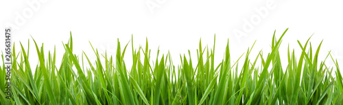 Obraz green grass isolated - fototapety do salonu