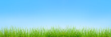 Spring Green Grass  Background Over Sky