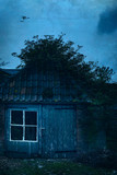 Old wooden barn overgrown in ivy under cloudy sky in twilight. - 265638497