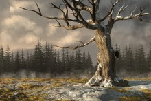 A Twisted Leafless Oak Tree Stands In A Snow Covered Field Beneath Dark Clouds. Brown And Yellow Grass Break Through The Dusting Of Snow, And Fir Trees Line The Edge Of The Field.  3D Rendering