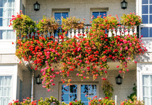 Windows With Flowers In The Ba...