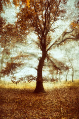 Fototapeta Jesień Abstract tree with grunge effect