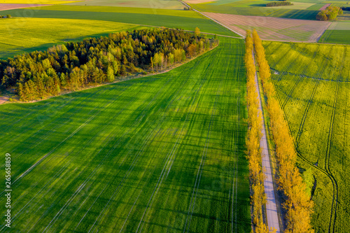 Obraz Aerial view of fields and meadows - fototapety do salonu