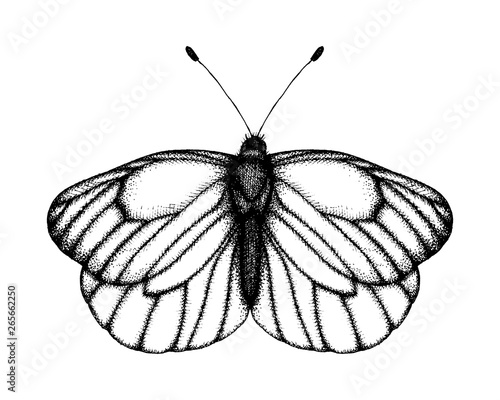 Foto op Canvas Vlinders in Grunge Black and white vector illustration of a butterfly. Hand drawn insect sketch. Detailed graphic drawing of black veined white in vintage style.