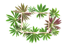 Exotic Green Lupin Leaves With Wooden Frame Or Border With Copy Space Isolated On White Background. Green, Eco Nature Spring Summer Concept