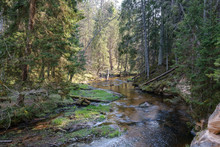 Rock Covered River Bed In Forest With Low Water Level