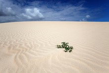 Single Plant Growing In A Sand...