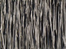 Reed Texture Background