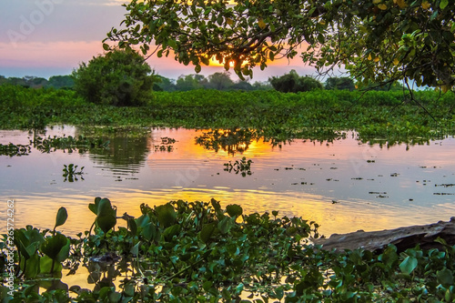 Valokuva  Sunset with Reflection on the Water, Green Plants and Trees and River in Pantanal, Brazil