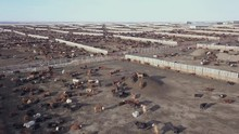 Cattle Pens In A Large Feedlot