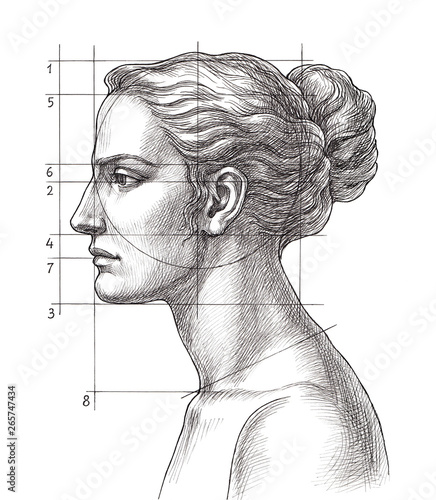 Hand drawn educational illustration, woman's head proportions. Fotobehang