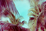 Coconut palm tree foliage under sky. Vintage background. Retro toned poster. - 265754496