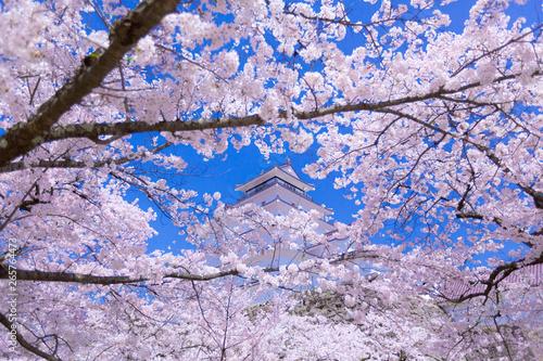城と桜の花 福島(日本)