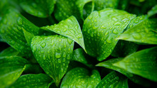 Green Foliage Of Plants Covere...