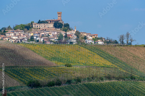 Foto op Plexiglas Lavendel Vineyards of Oltrepo Pavese in April