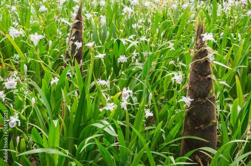 春の竹林 タケノコ
