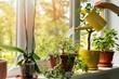 Leinwandbild Motiv hand with water can watering indoor plants on windowsill