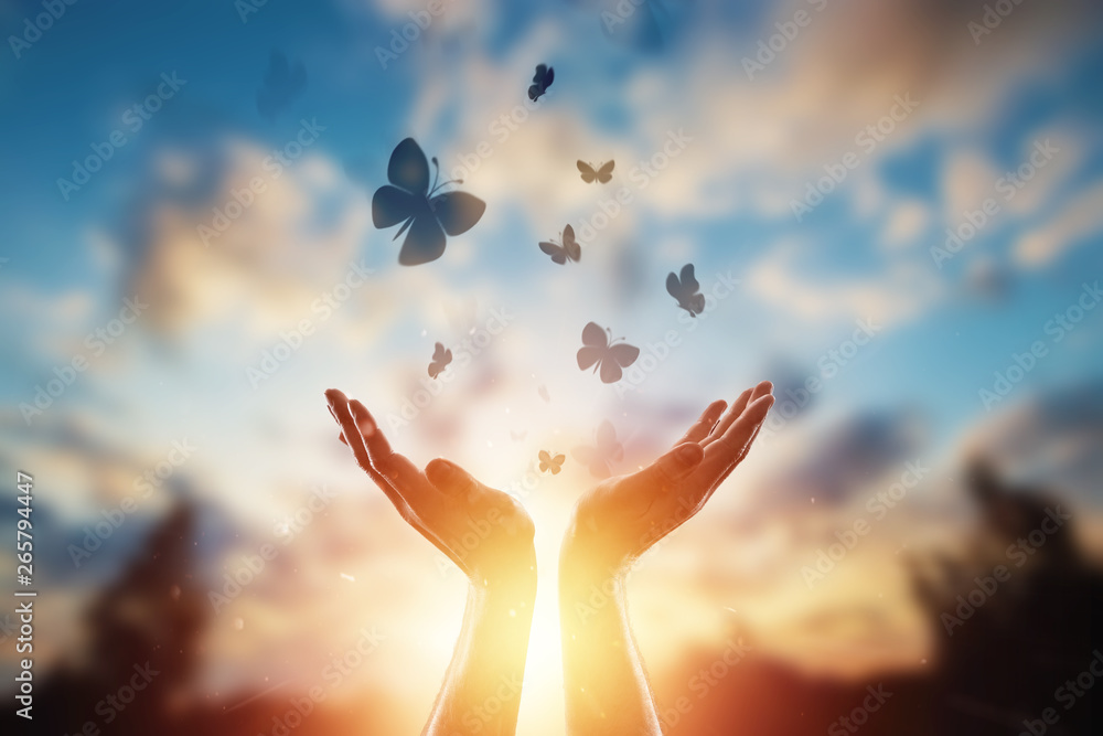 Fototapety, obrazy: Hands close up on the background of a beautiful sunset, a flock of butterflies flies, enjoying nature. The concept of hope, faith, religion, a symbol of hope and freedom.