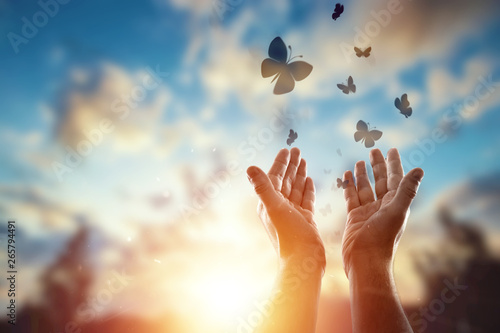 Fototapeta Hands close up on the background of a beautiful sunset, a flock of butterflies flies, enjoying nature