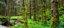 Amazing Nature Landscape View ...