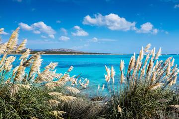 FototapetaSpiaggia la Pelosa a stintino in Sardegna