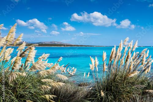 Photo Spiaggia la Pelosa a stintino in Sardegna