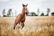 Pferd Fohlen gallopiert frei auf dem Feld
