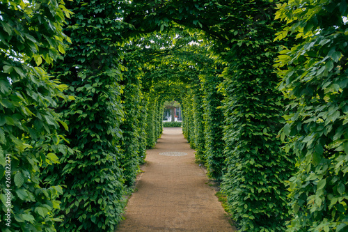 tunnel of green leaves path Wallpaper Mural