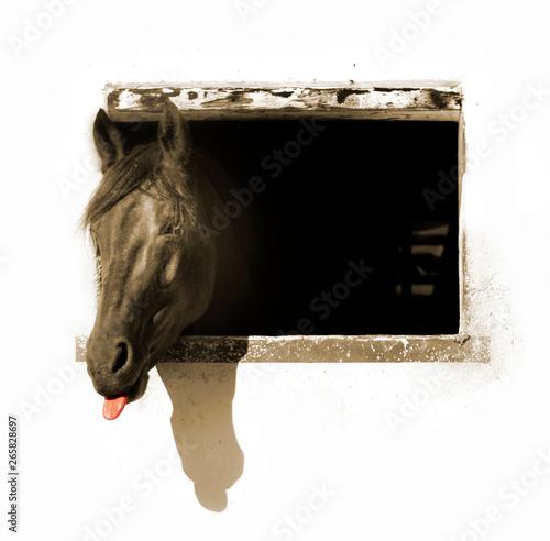 Obraz na plátně cavallo finestra