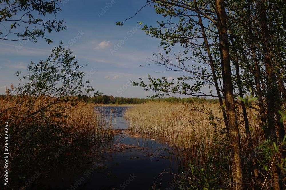 Fototapeta Poleski Park Narodowy
